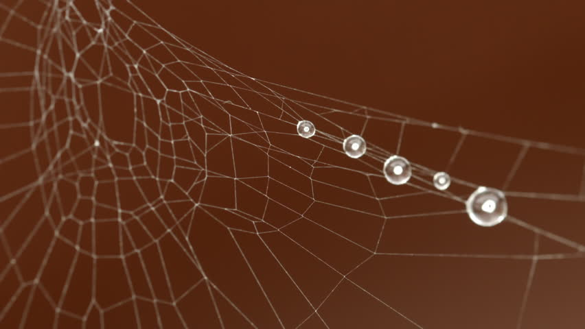Spider Web extreme close up HD Stock Footage. A full macro Close up shot of a Spiders Web with water droplets attached to it from the mist. - HD stock video clip