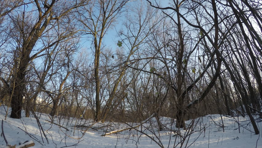 Time lapse shoot of winter forest.  - HD stock footage clip