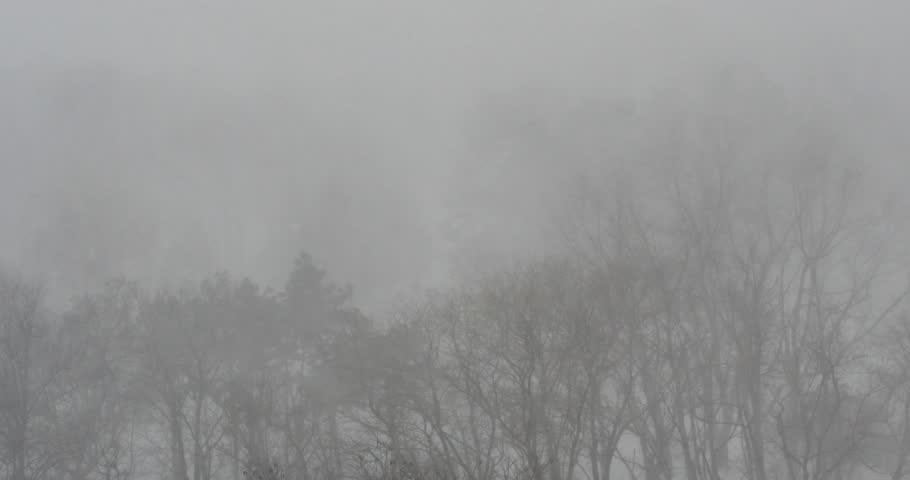 Snow blizzard in winter forest. View from above. - 4K stock footage clip