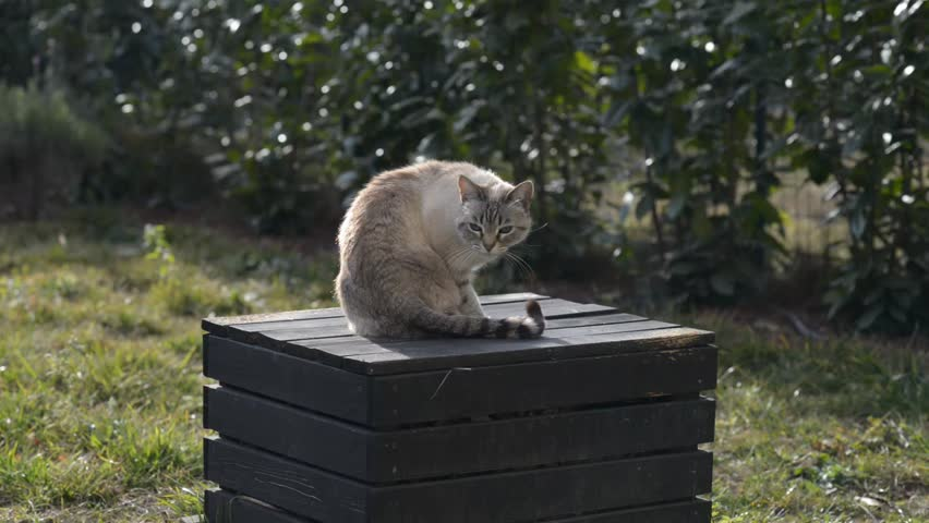 Domestic cat on bench in home garden looking at the camera and running way. Outdoors video with shallow depth of field. | Shutterstock HD Video #13970930