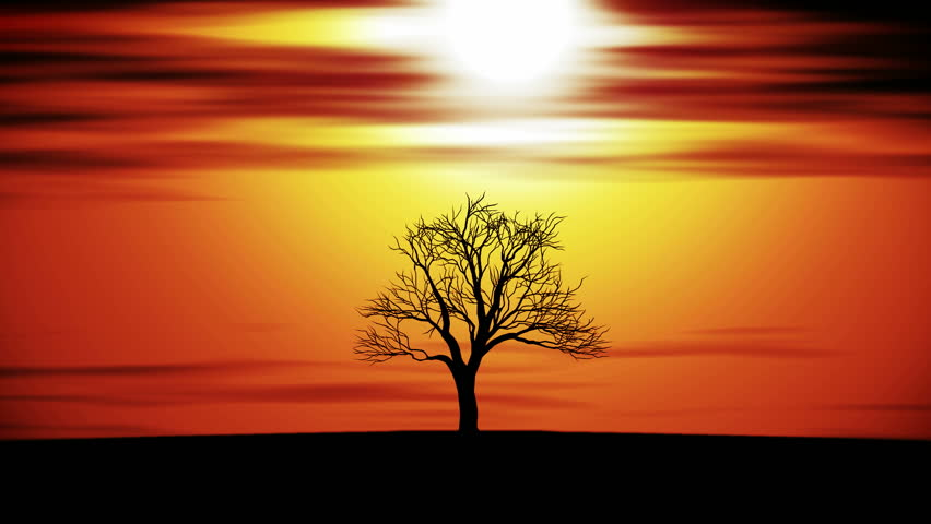 Silhouette of tree at sunset, animation | Shutterstock HD Video #14013770