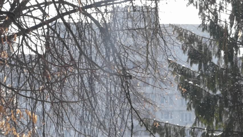 The amazing effect of snowy weather in Sunny day in the park. In the background high-rise building. Foreground threes and pine.  - HD stock video clip