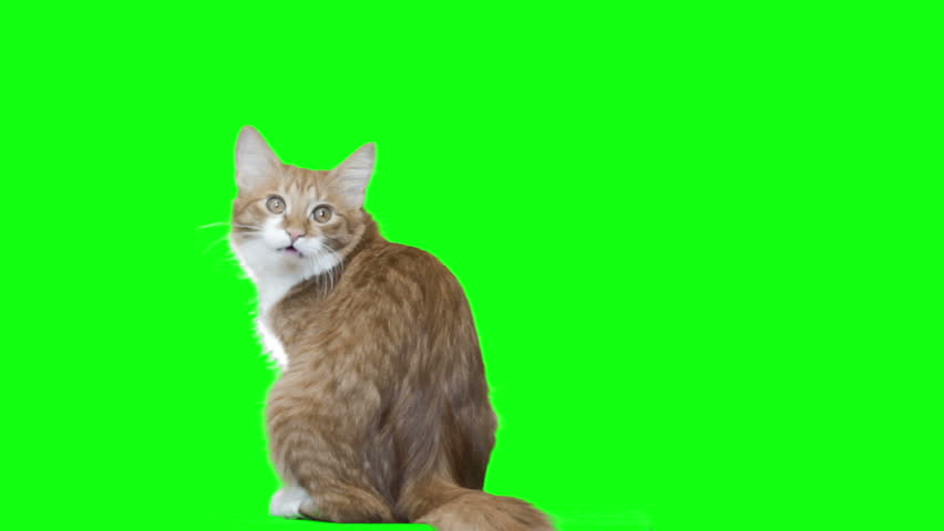 Cat washes and looks  | Shutterstock HD Video #14138807