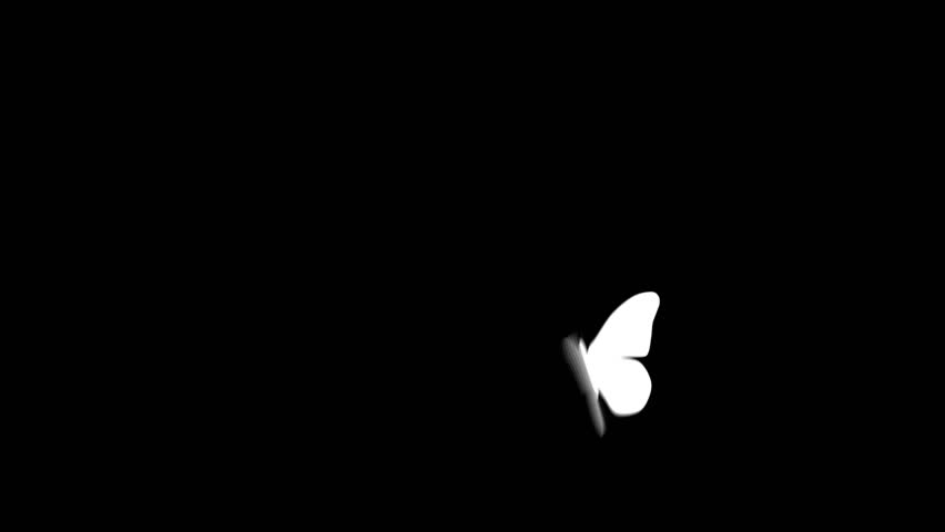 Butterfly flying and landing. Includes Alpha channel. - HD stock video clip