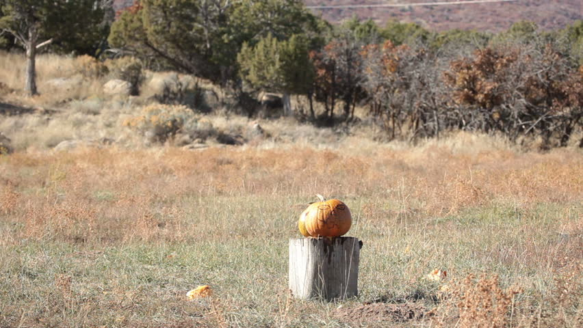 Pumpkin violently explodes after being struck by a high power rifle slow motion. Complete vaporization in a cloud of parts. Halloween or harvest subject. | Shutterstock HD Video #1524659
