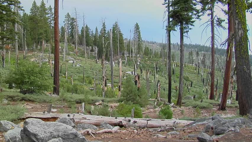 how to clean up after a forest fire