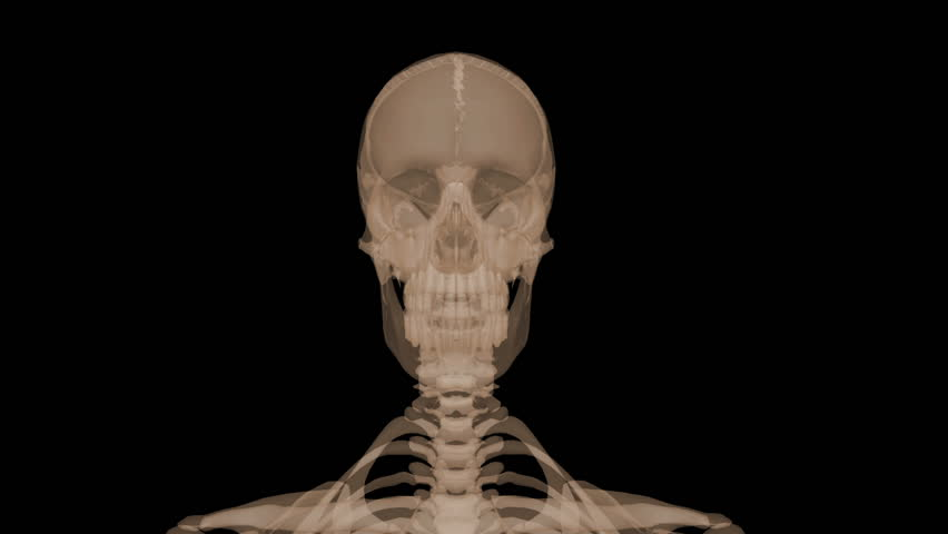 3D X-ray of head, body, spine, and skull - HD stock video clip