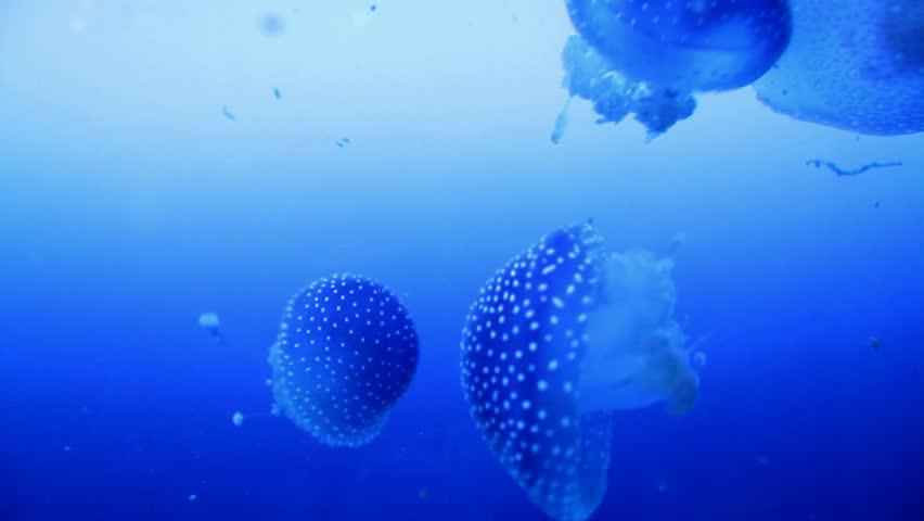 Jellyfish - HD stock footage clip