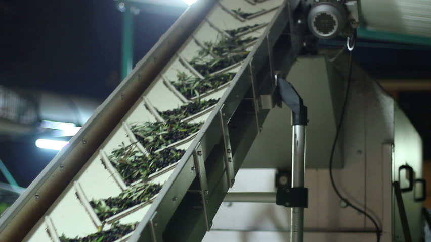 Oil mill - olive oil production - Conveyor belt constantly feeding olives into small scale olive oil mill factory for extracting extra virgin olive oil - HD stock footage clip