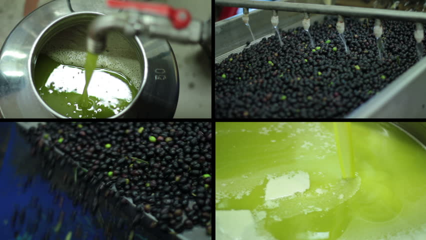 Oil mill - olive oil production- Machine washing the olives - HD stock video clip