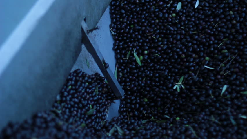 Oil mill - olive oil production - HD stock footage clip
