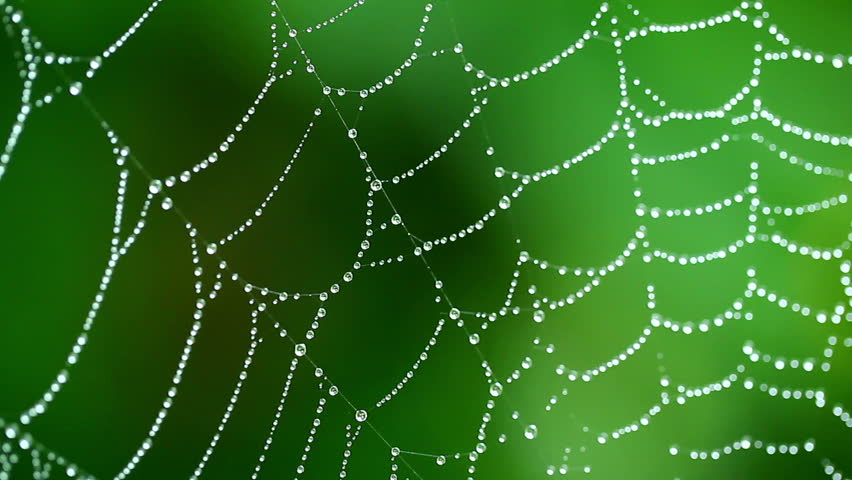 Macro View of Spider Web