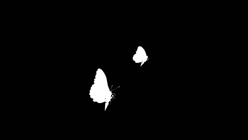 Two White Moths Or Butterflies On A Black Background Stock ...