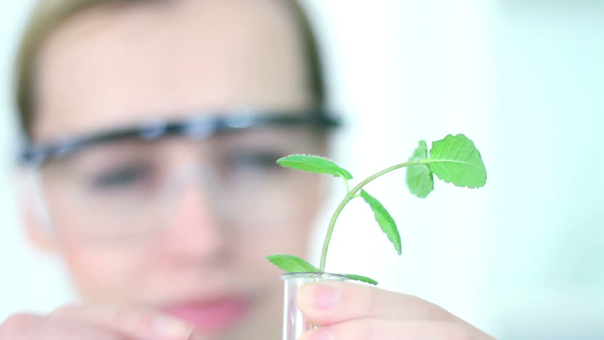 Female scientist analyzing plant in test tube, camera stabilizer shot - HD stock footage clip