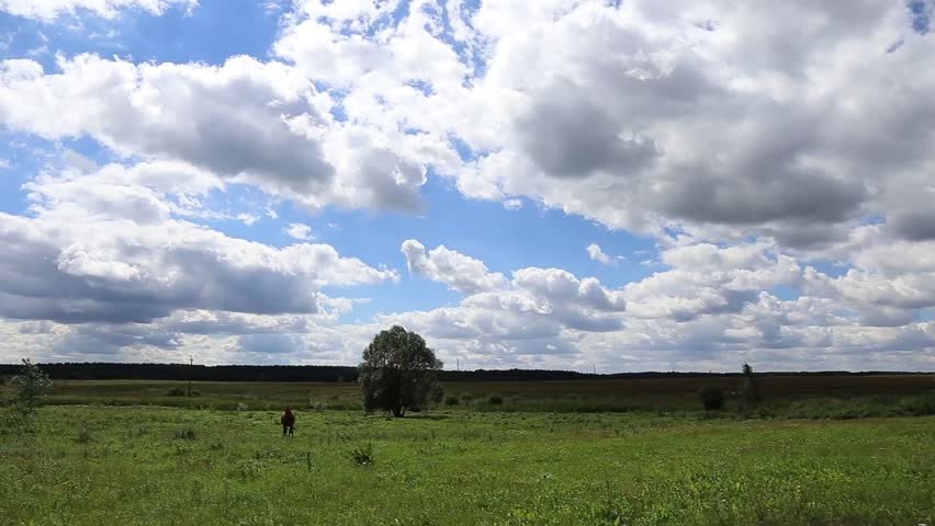 Walking Horse. The horse moves slowly against the background of the blue sky in the field. Summer in the Village. Village. Horse. Horse against the sky goes for a guide on horse farm   Shutterstock HD Video #18846590