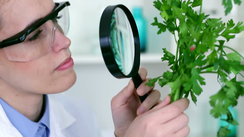 Biochemist looking at green plant through magnifying glass,  - HD stock footage clip