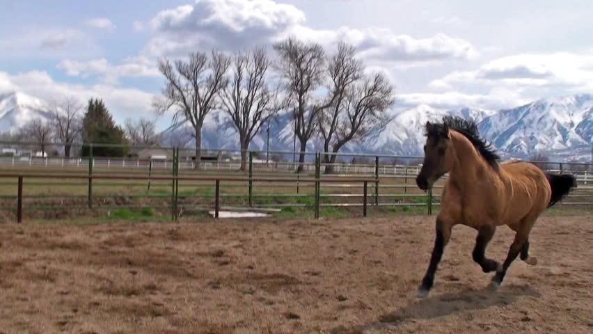 Light brown horse running - photo#16