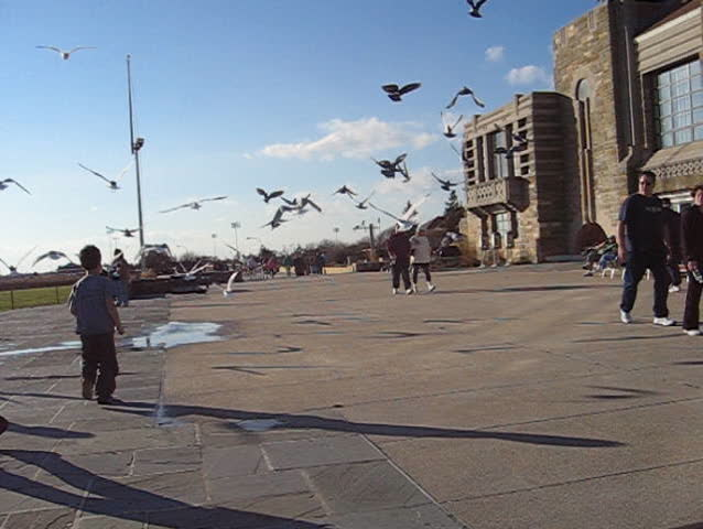 birds  at jones beach, new york - SD stock video clip
