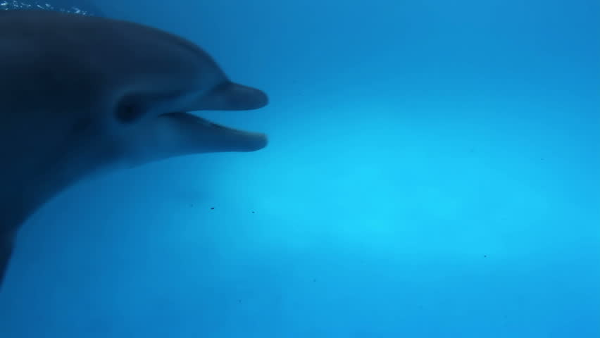 a shot of dolphins swimming around