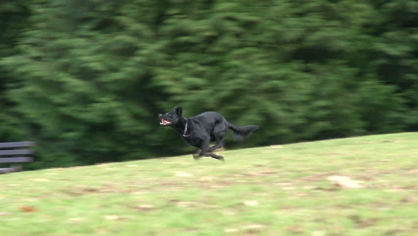 Dog runs to fetch ball and leaps down hill.
