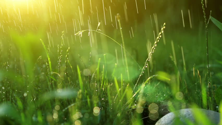 dew drops in lights on green grass.   - HD stock footage clip