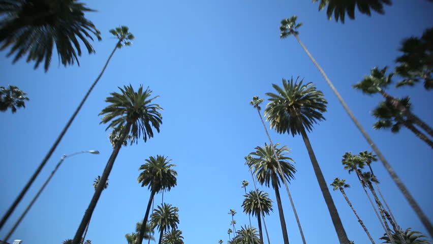 Driving through Palm Trees on Beverly Drive | Shutterstock HD Video #2372936