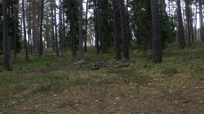 hd fast moving forest - photo #39