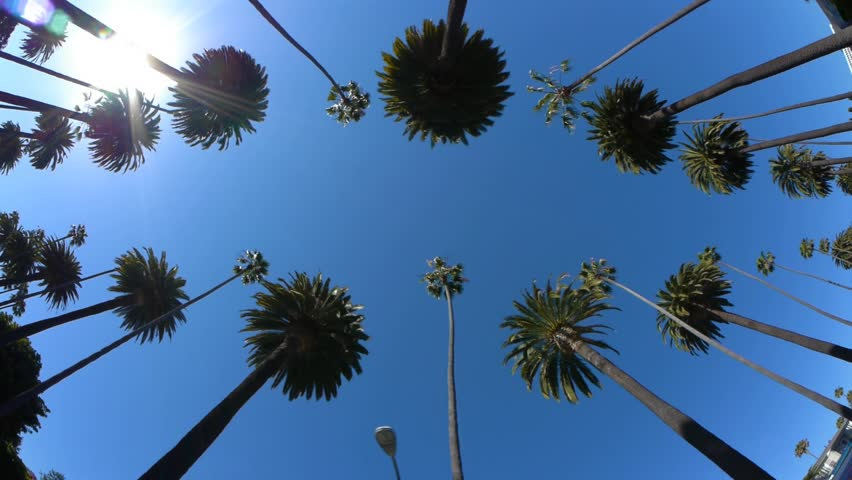 Driving under palm trees in Beverly Hills, California