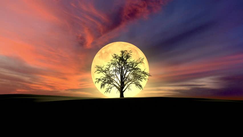 Growing tree at sunrise 3d rendering  | Shutterstock HD Video #24824768