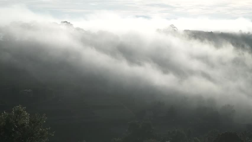 DA LAT, VIETNAM, Sep 23, 2015: pine forest, highland Da Lat city fog in the morning | Shutterstock HD Video #25001789