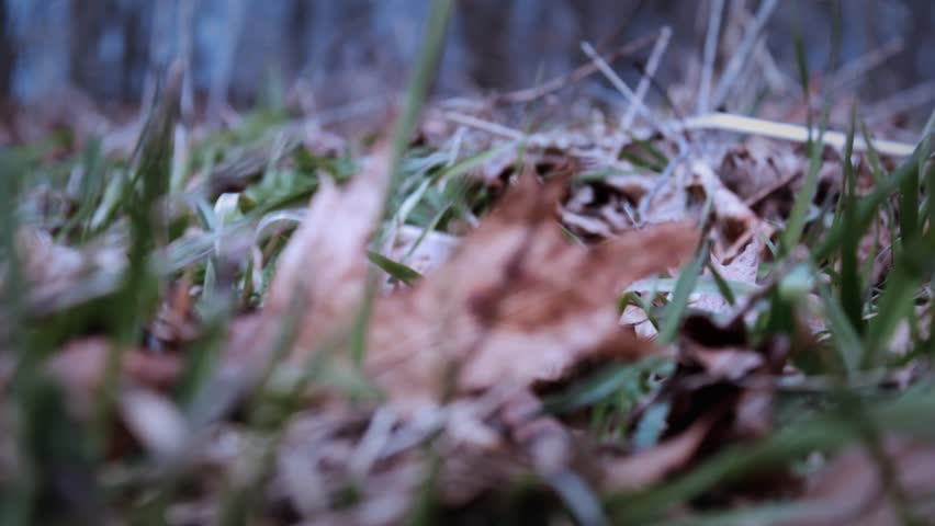 Smooth Camera move along spooky windy grass blades near Halloween in October | Shutterstock HD Video #25185299
