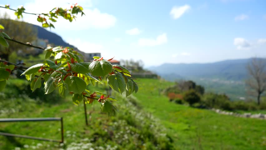 Pasture for animals in the mountains. Flowers and plants in Montenegro.   Shutterstock HD Video #25220570