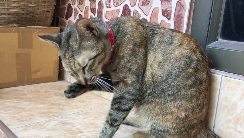 Cat cute animal playing background pet floor portrait   Shutterstock HD Video #25231001