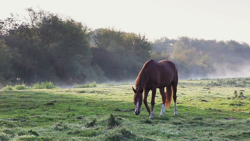 Arabian horse grazing in the sunlight. Dramatic and picturesque morning scene. Wonderful natural background. Location place Ukraine, Europe. Explore the world's beauty. Shooting in HD 1080 video. | Shutterstock HD Video #25244366