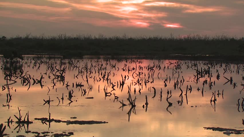 Wet Landscape at Sunrise  - HD stock video clip