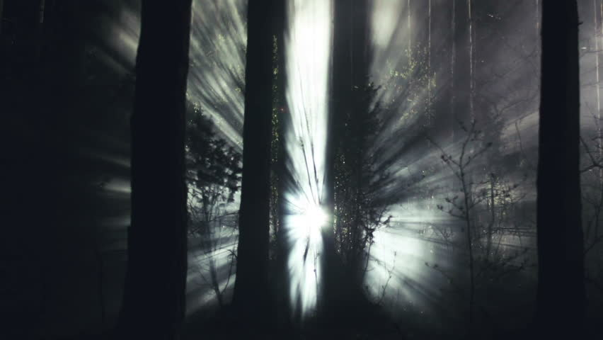 Cinematic light rays in the night forest mystical smoke and fog | Shutterstock HD Video #25894490