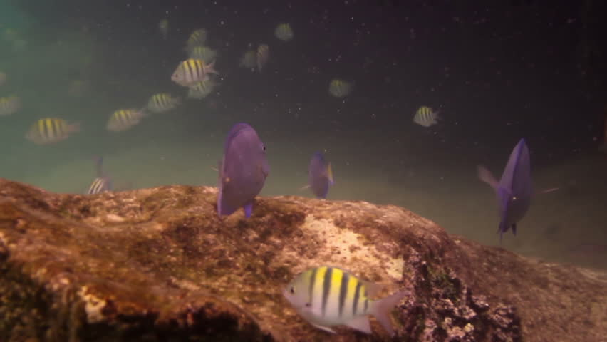 underwater shots whilst snorkeling in a marine park, mexico caribbean coast - HD stock video clip