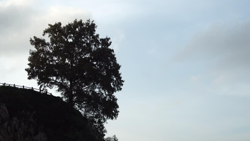 lonely tree on hillside  #26041271