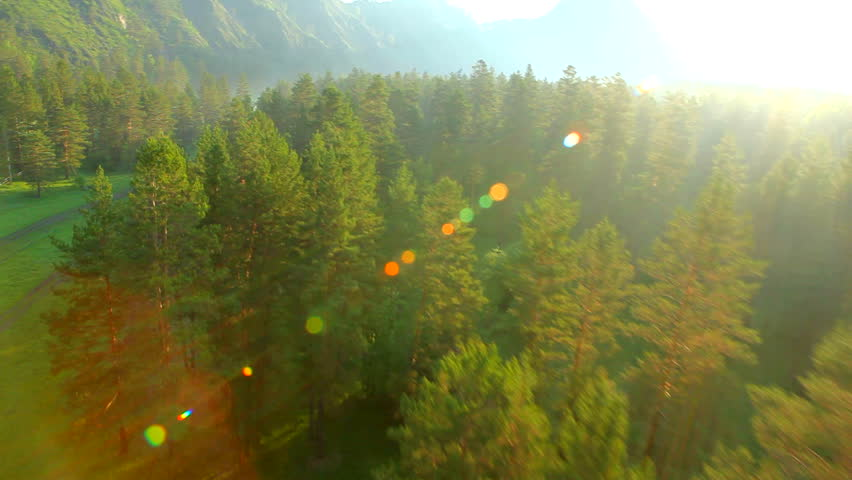 flying over the green forest - HD stock footage clip