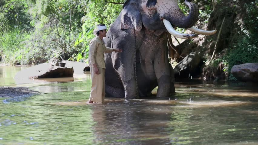 Asian mahout with elephant in creek ,Chiang mai Thailand. | Shutterstock HD Video #26221397