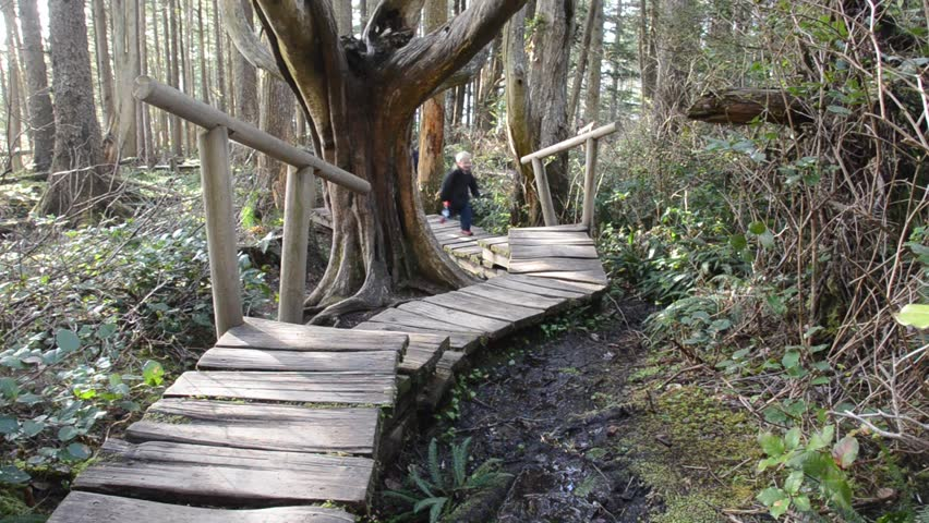 children exploring fantastical forest on boardwalk trail - HD stock video clip