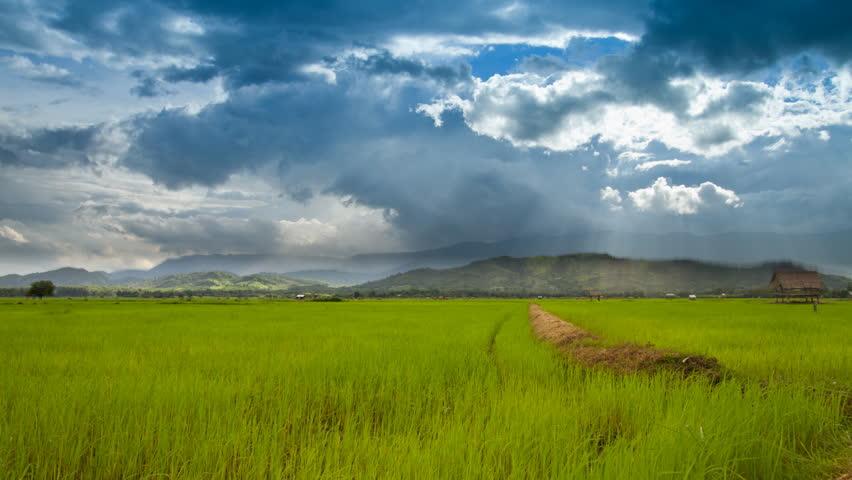 Time Lapse Rice Farming In The Rainy Season In Thailand
