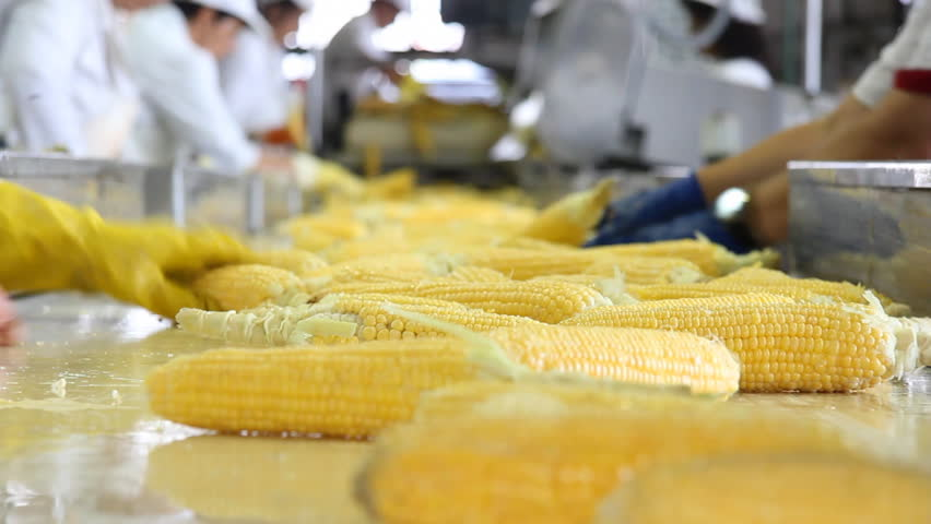 Corn processing factory