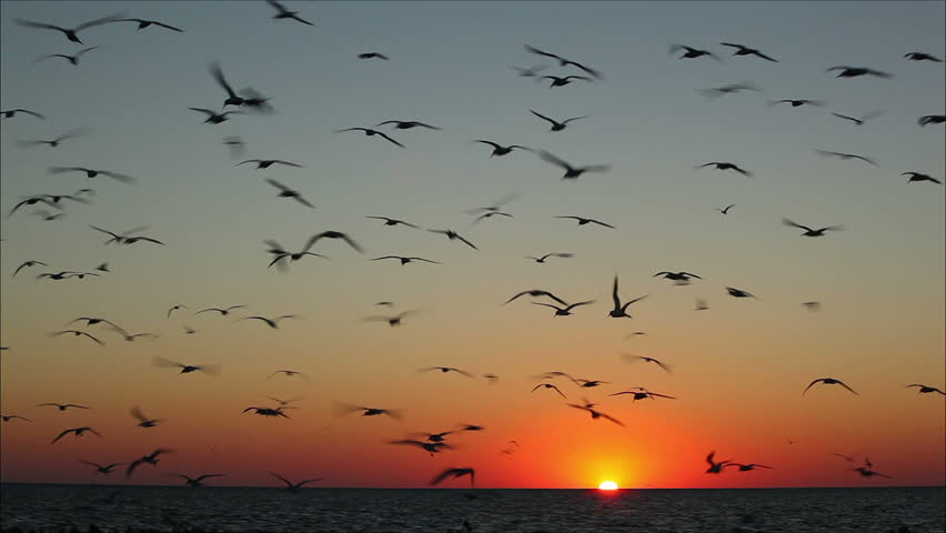 Flying Birds Free Stock Photos Download 3 416 Free Stock: Lot Of Birds Flying Against A Beautiful Sunset 3 Stock
