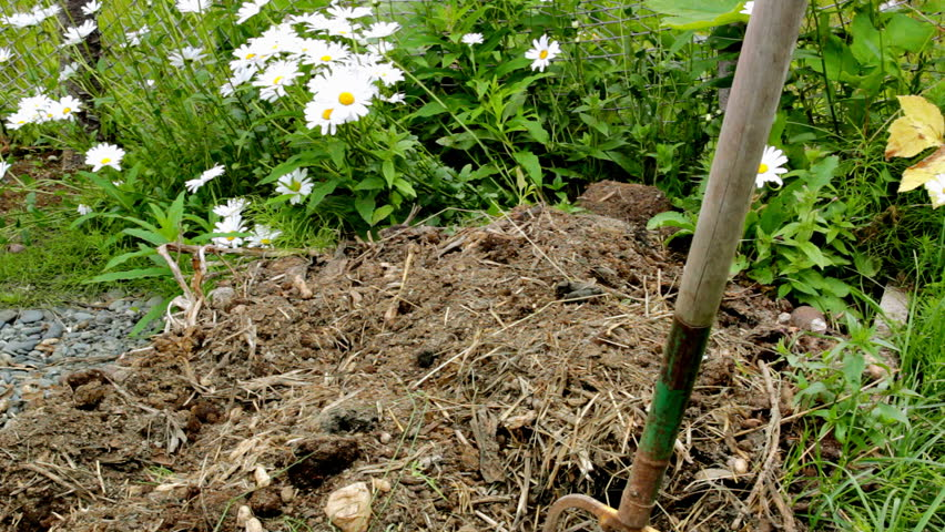 Slowly turning a home compost pile in the garden with a pitchfork with daisies in the background.