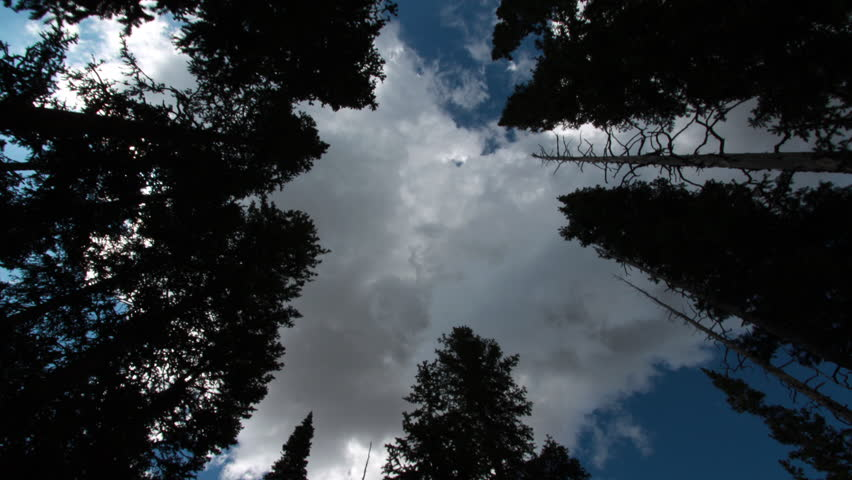 A motion time-lapse of evergreen trees in Rocky Mountain National Park, Colorado with storm like clouds moving overhead
