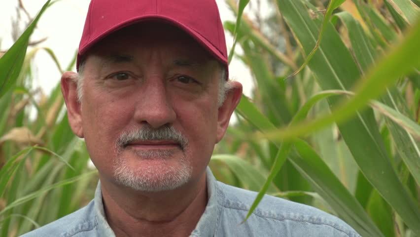 Farmer, close up of face in corn field