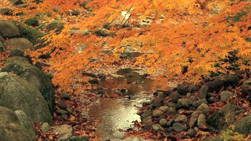 Autumn twigs with mountain river in the background.