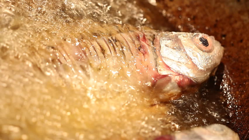 Fresh fish frying in hot oil stock footage video 3056785 for Oil for frying fish