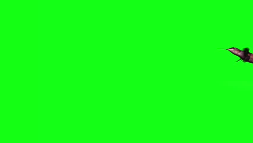 Hummingbird fly in slow motion on green screen